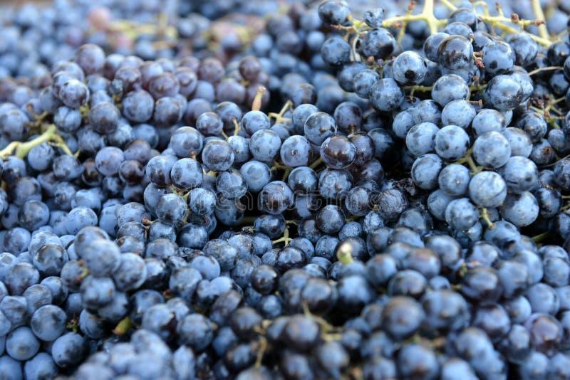 红葡萄酒的葡萄 免版税库存照片