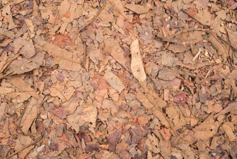 红褐色的干叶子和废弃分支和石渣纹理背景 库存照片