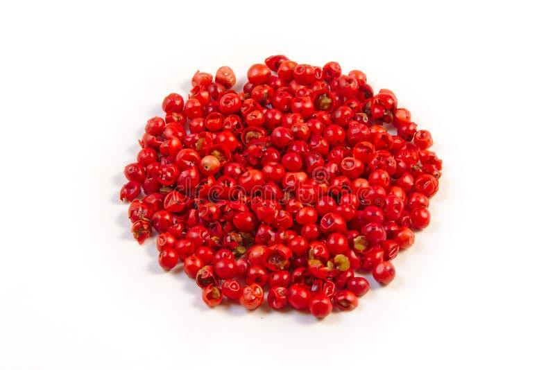 红辣椒,隔绝在白色背景 图库摄影