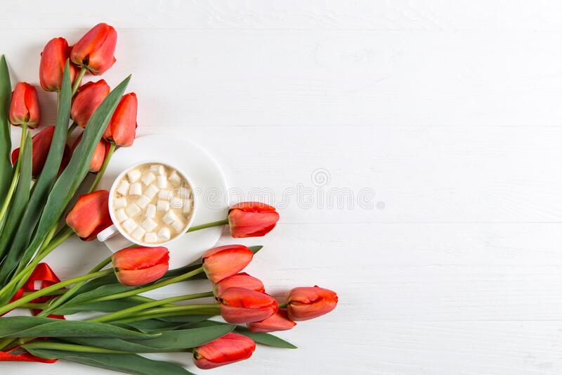 红郁金香,一杯带棉花糖的白色背景咖啡 为春假准备明信片 复制空间 免版税库存图片