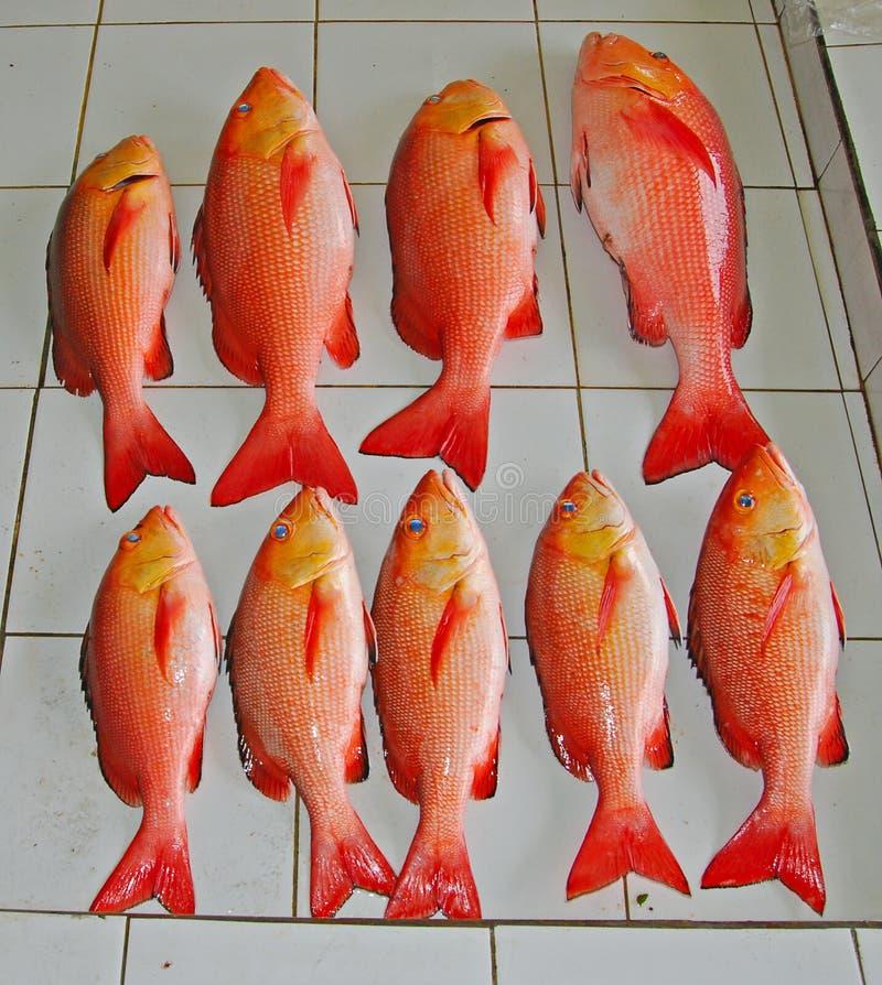 红鲷鱼待售在鱼市上 库存照片