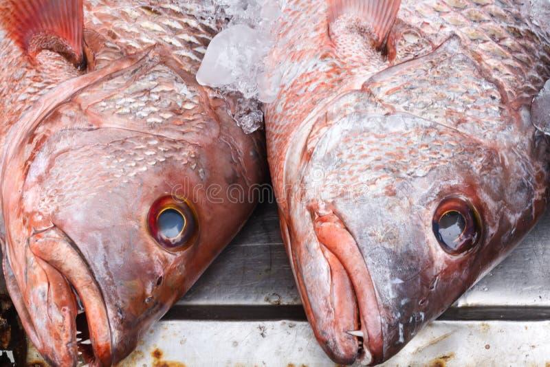 红鲷鱼鱼头 库存照片