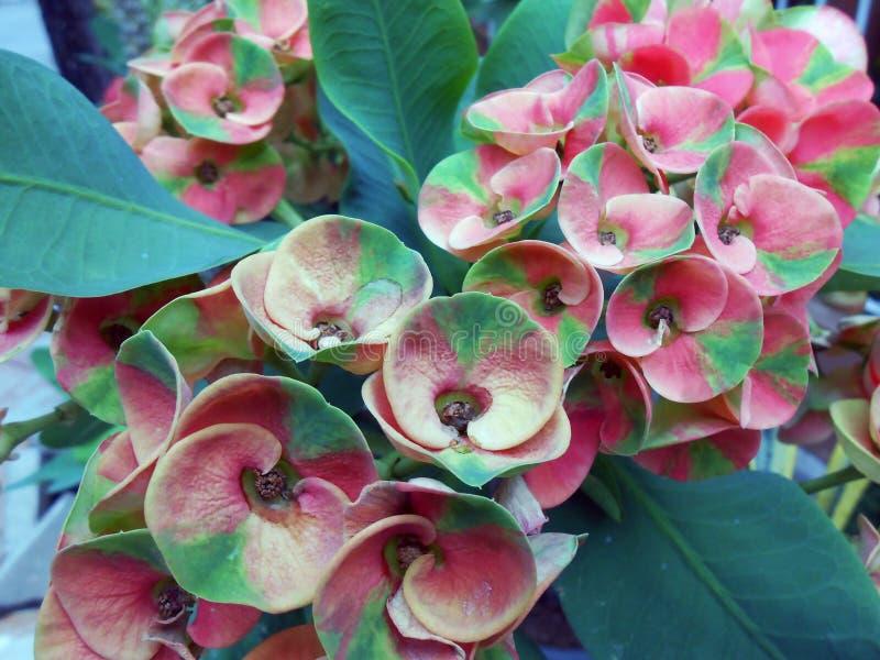 红绿的小的花 库存照片