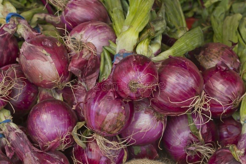 与密度的新鲜的被收获的红时间在照片农夫上洋葱v密度市场:august糖粉叶子图片