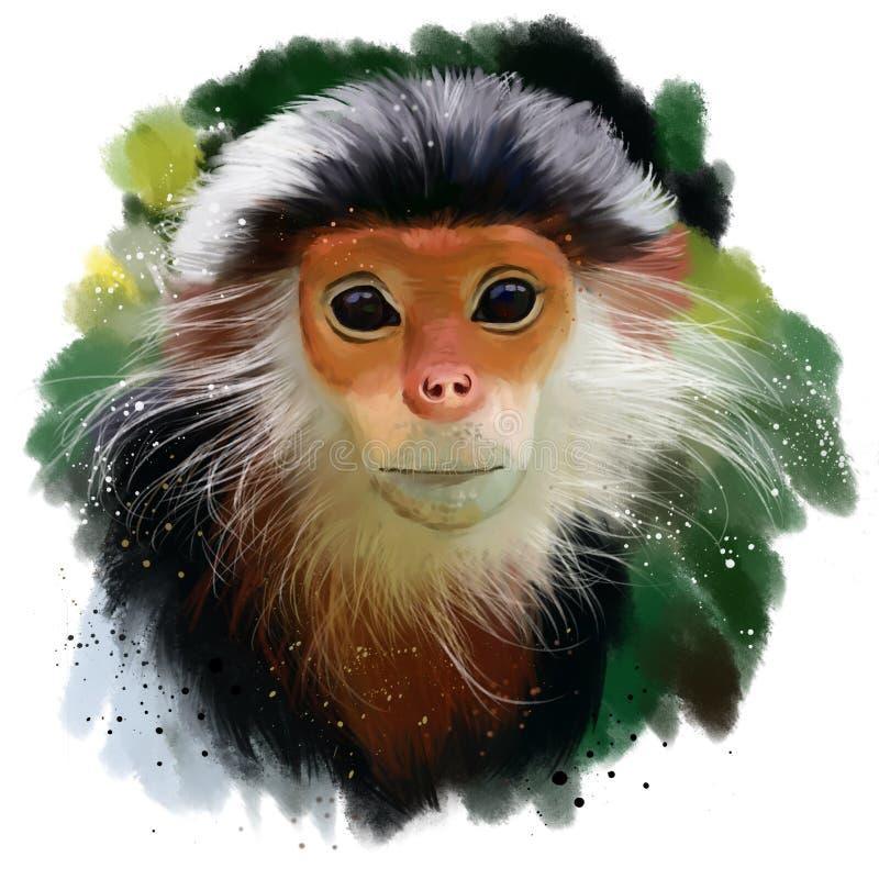 红shanked Douc叶猴 皇族释放例证