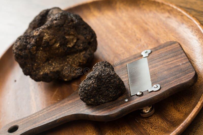 纤巧蘑菇黑色块菌 图库摄影
