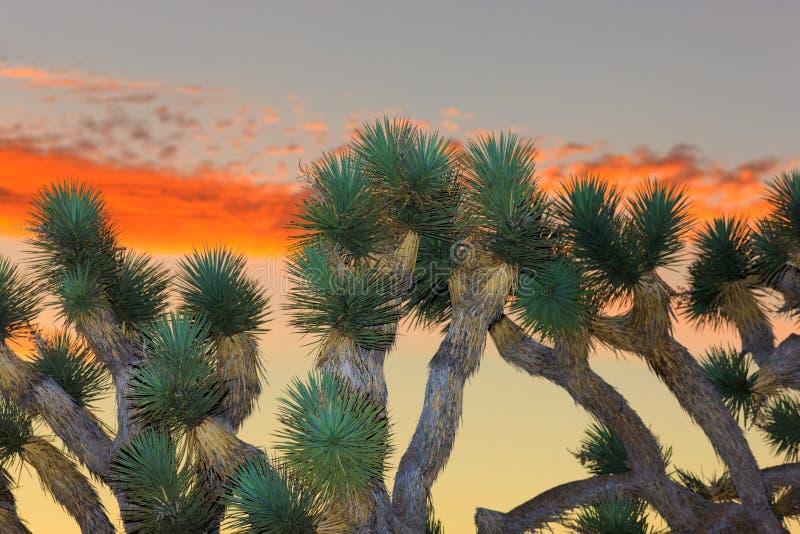 约书亚国家公园结构树 免版税图库摄影