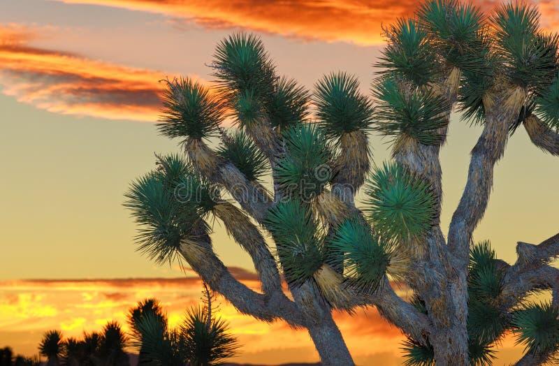 约书亚国家公园结构树 免版税库存照片