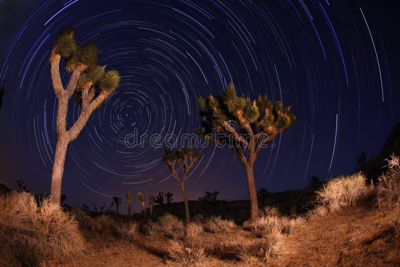 约书亚国家晚上射击星形落后结构树 免版税库存图片