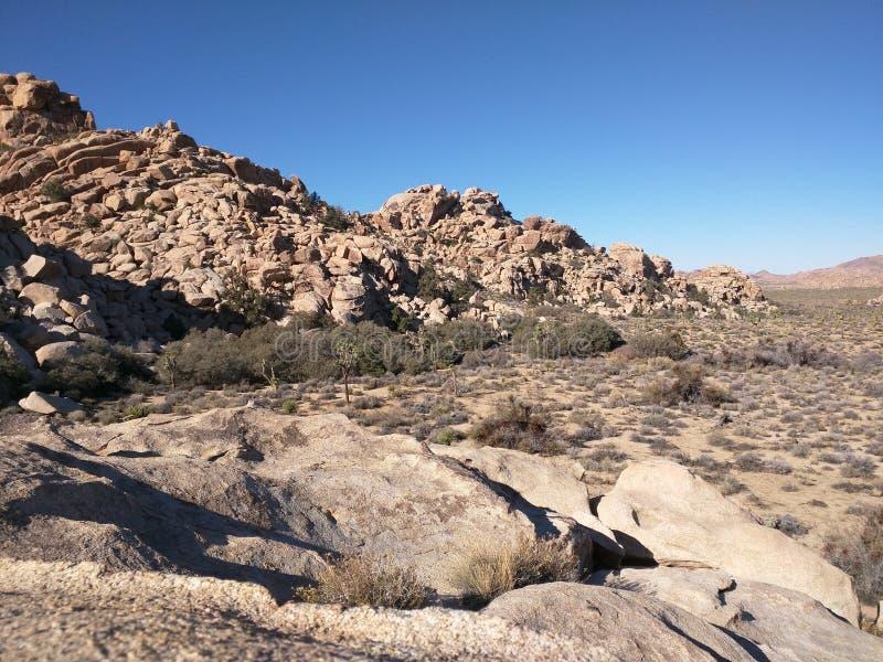 约书亚树国家公园在莫哈维沙漠 图库摄影