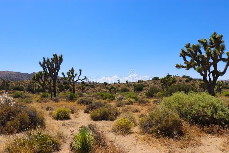 约书亚树国家公园,莫哈韦沙漠 免版税库存照片