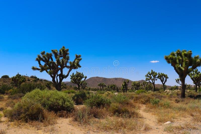 约书亚树国家公园,莫哈韦沙漠 图库摄影