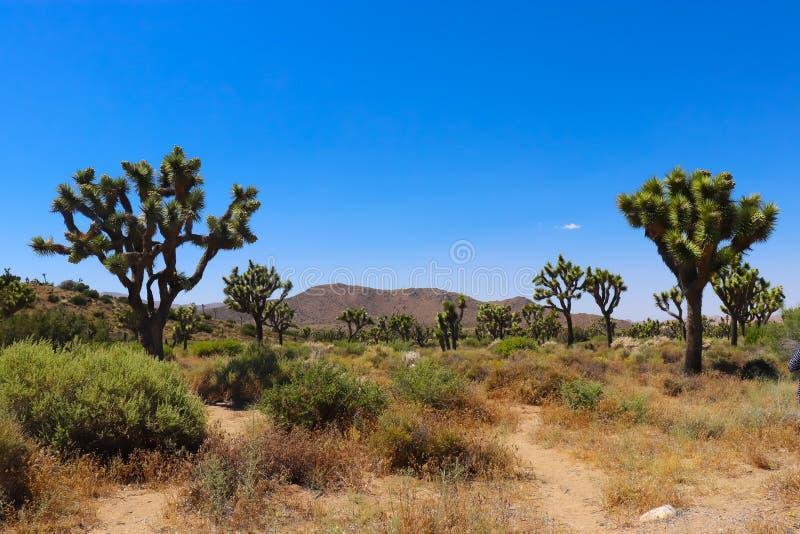 约书亚树国家公园,莫哈韦沙漠 免版税图库摄影