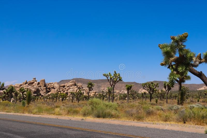 约书亚树国家公园,莫哈韦沙漠 免版税库存图片