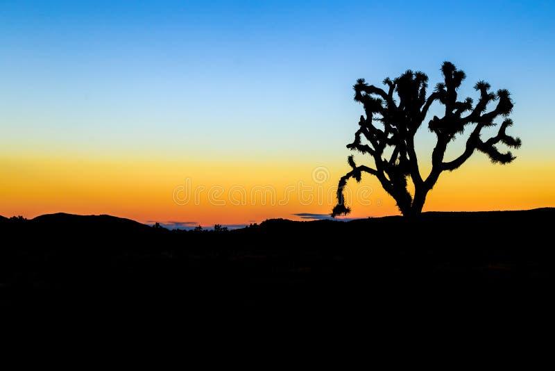 约书亚树在晚上 库存图片
