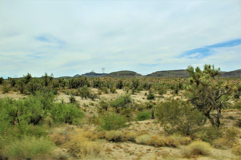 约书亚树森林大路,风景路线93,亚利桑那,美国 库存照片