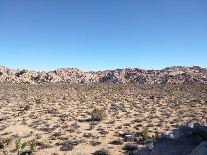 约书亚树森林沙漠视图  库存图片