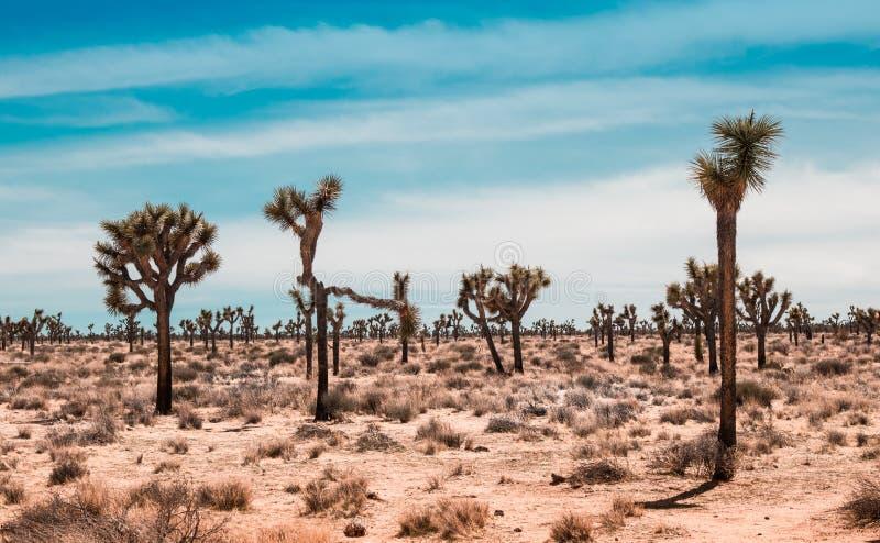 约书亚树沙漠风景 库存图片