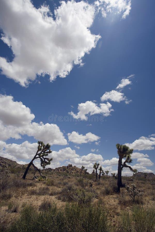 约书亚树,加利福尼亚 免版税库存照片
