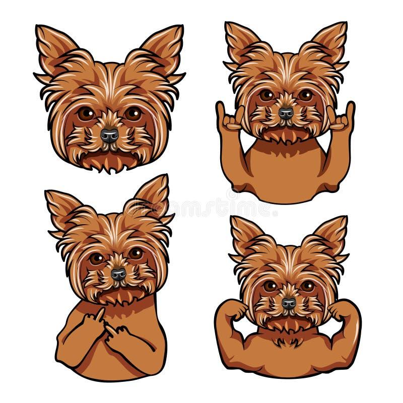 约克夏狗 岩石姿态,中指,肌肉 狗面孔,枪口,头 向量 库存例证