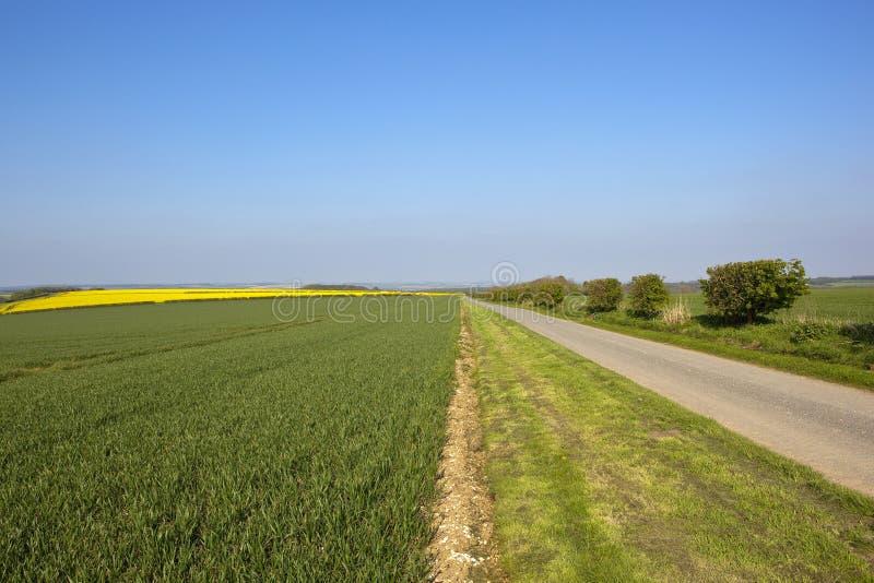 约克夏黄木樨草的五颜六色的山地农田春天 免版税图库摄影