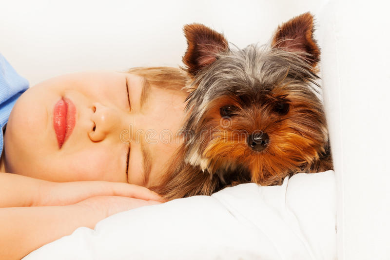 约克狗特写镜头视图与睡觉的男孩的 免版税库存图片
