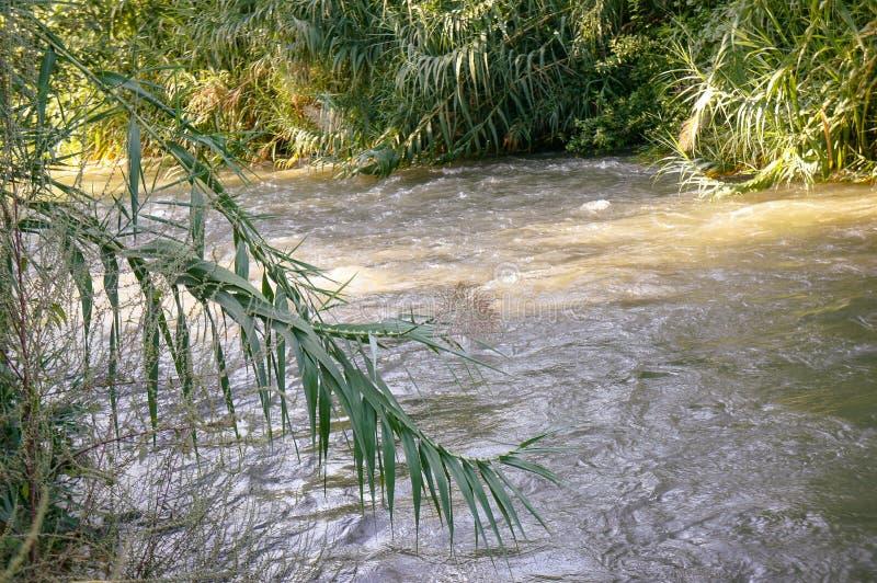 约旦河,以色列 库存照片