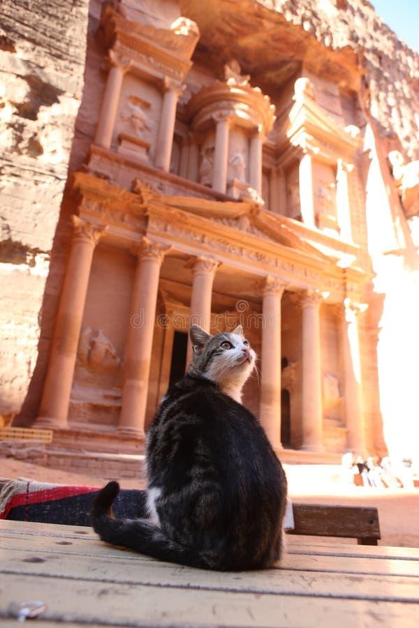 约旦Petra财宝猫 库存照片