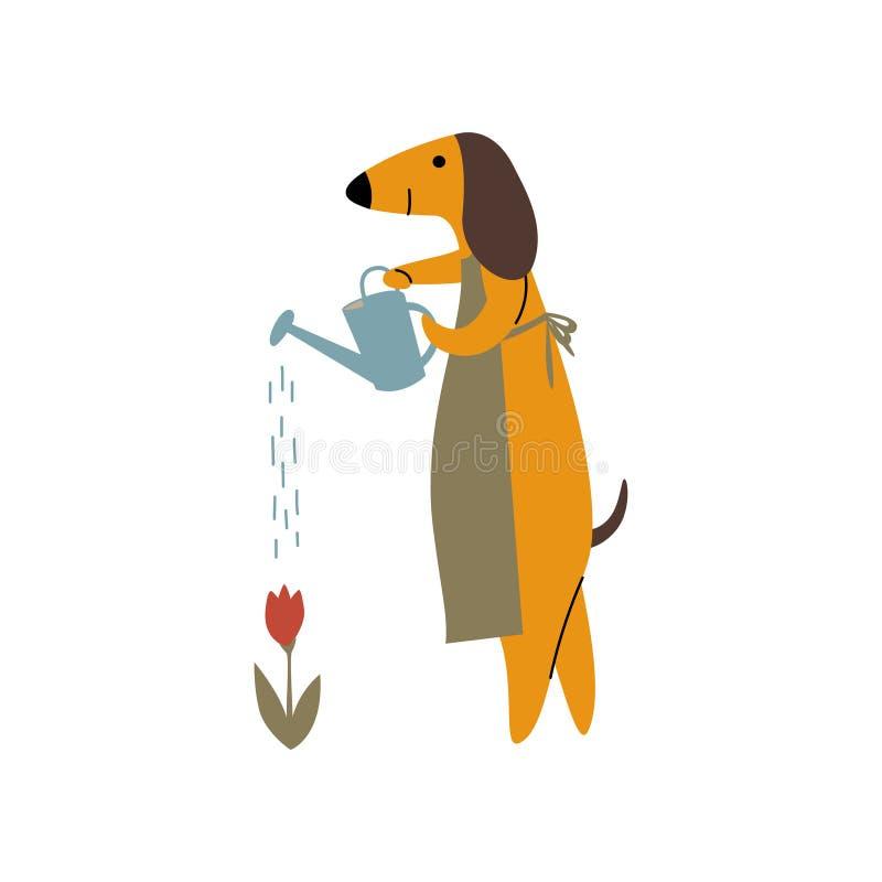 纯血统与喷壶,滑稽的嬉戏的宠物卡通人物传染媒介的布朗达克斯猎犬狗浇灌的花 库存例证