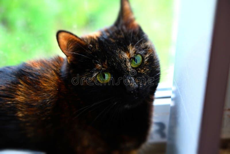 纯谨的猫乞求饶恕 库存照片