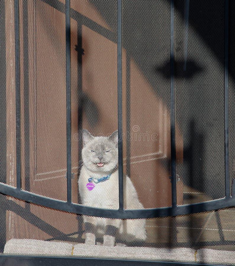 纱门猫 免版税库存图片
