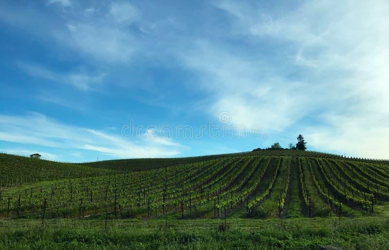 纳帕葡萄园绵延山风景在多云天空下 库存图片