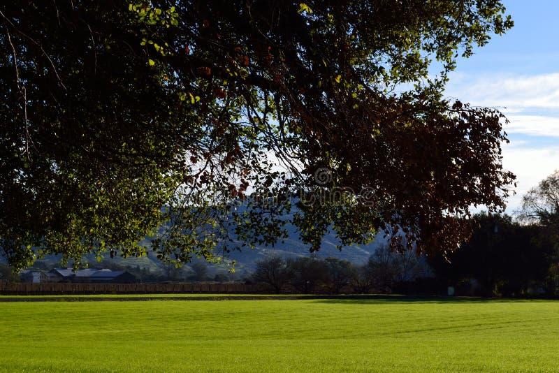 纳帕谷加利福尼亚与前景树的农田 免版税图库摄影