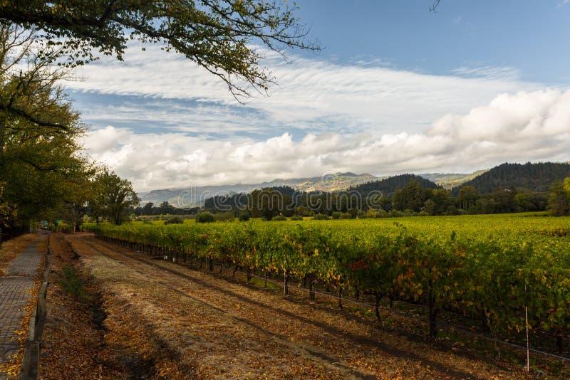 纳帕谷,加利福尼亚,美国的葡萄领域 免版税库存照片