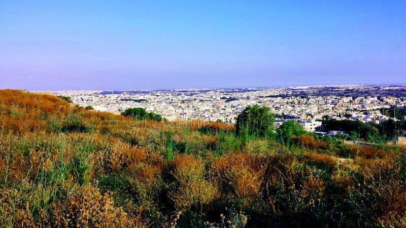 纳沙尔绿叶-马耳他 库存照片