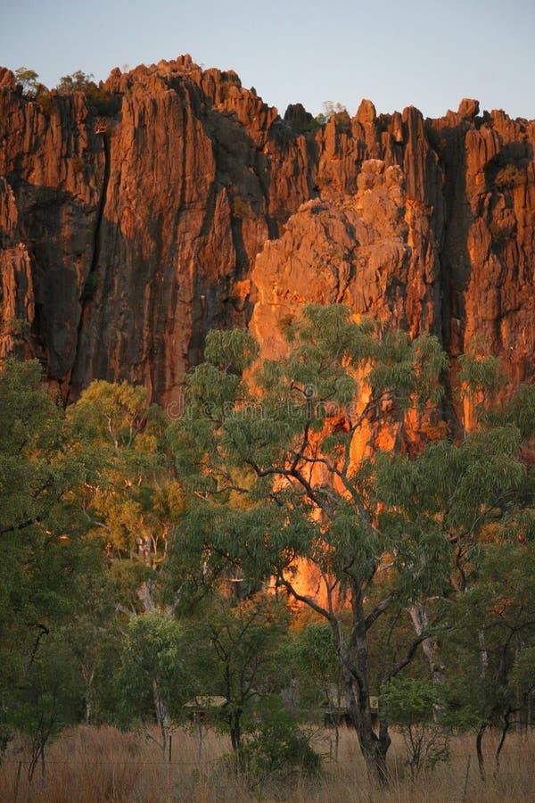 纳皮尔的泥盆纪石灰石峭壁在Windjana峡谷排列, 免版税库存照片