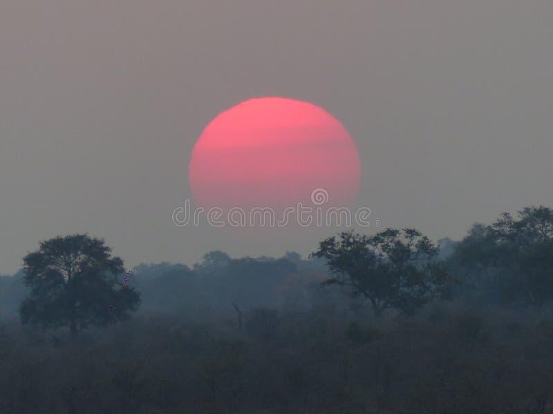 纳米比亚密林日落, Okavango三角洲 图库摄影