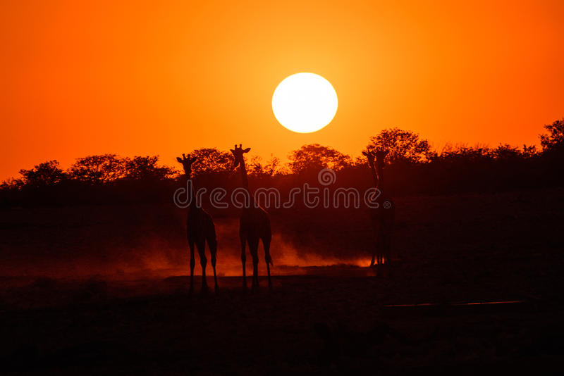 纳米比亚徒步旅行队日落 免版税图库摄影