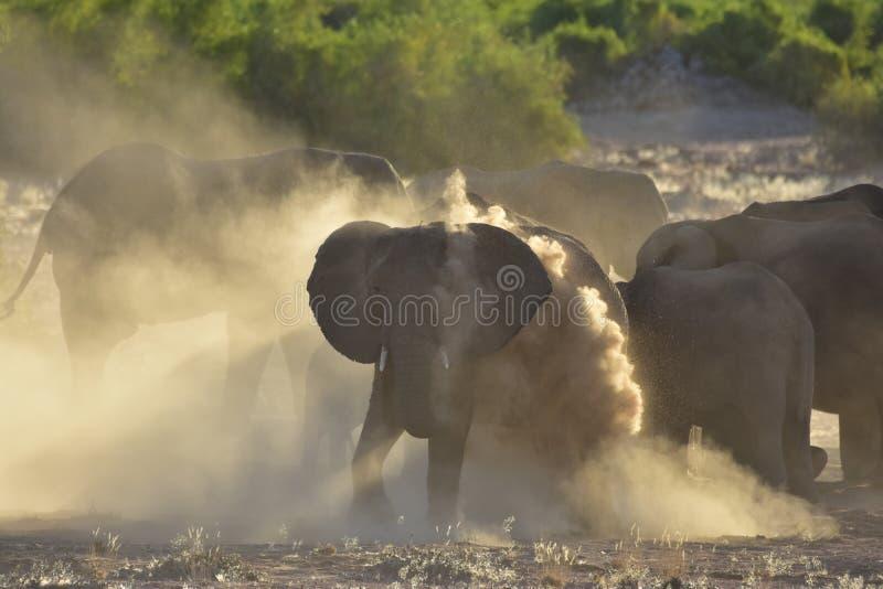 纳米比亚沙漠大象 库存图片