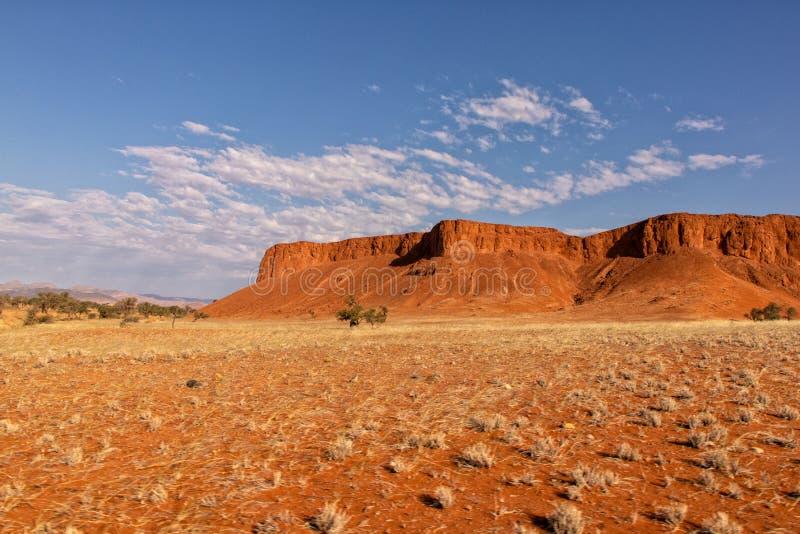 纳米比亚沙漠石化了沙丘 免版税库存照片