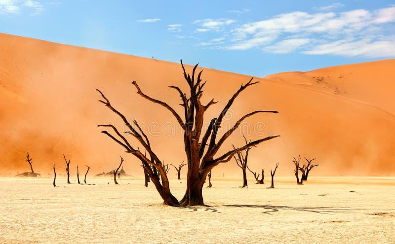 纳米比亚沙漠风景 库存照片