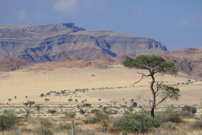 纳米比亚风景干燥沙漠 库存图片