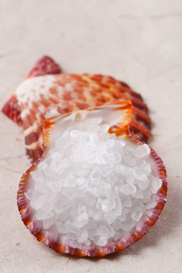 纸岩盐海运壳白色 免版税库存图片
