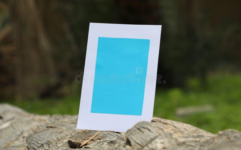 纸框架在下落的棕榈树干的 免版税库存照片