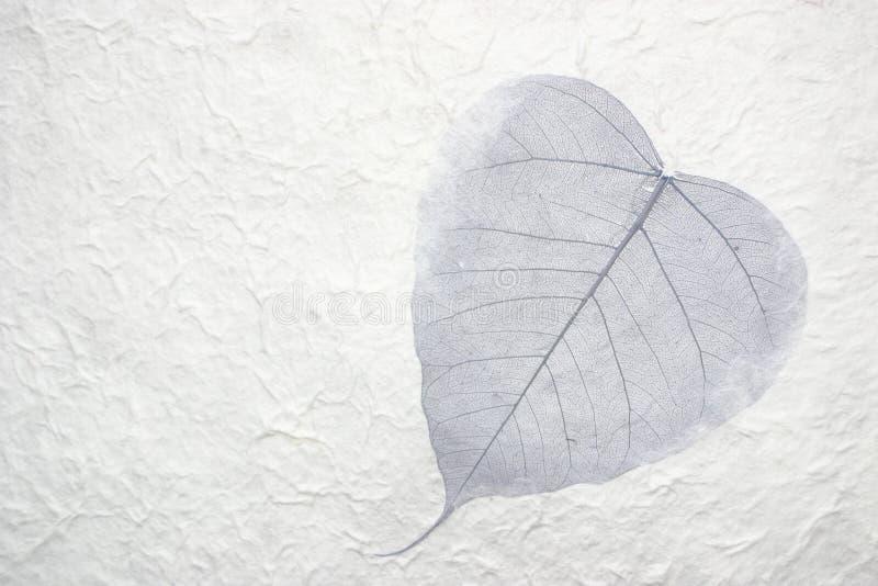 Download 纸的叶子选拔 库存照片. 图片 包括有 招标, 和平, 精神, 秋天, 和谐, 世纪, 详细资料, 化石, 获取 - 184246