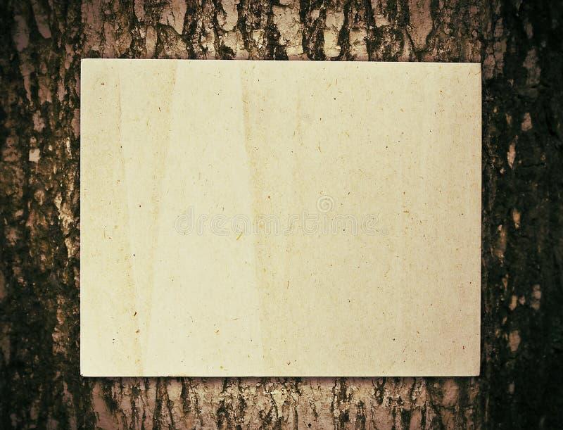 纸结构树 库存图片