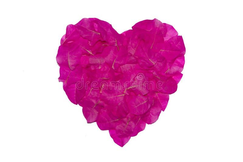 纸花的桃红色瓣被安排当心脏形状,爱的标志 背景查出的白色 免版税库存照片