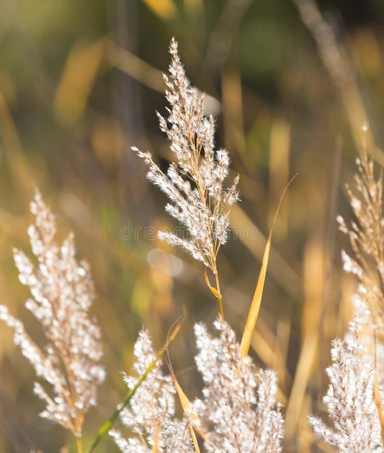 纸莎草作为背景的秋天自然 库存照片