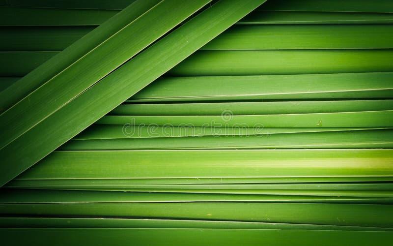 纸莎草摘要绿色叶子  库存照片