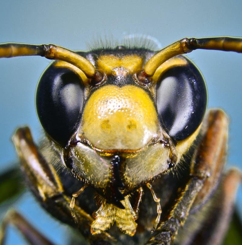纸质黄蜂 免版税库存照片